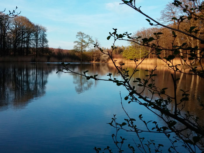 Hamberger See