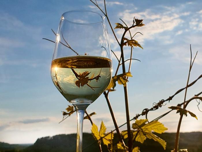 Weinglas mit Reben